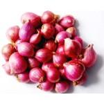 Onion Small